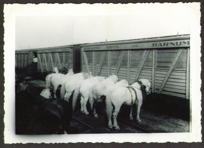 Image for Draft Horses trackside Ringling Bros Circus photo 1937